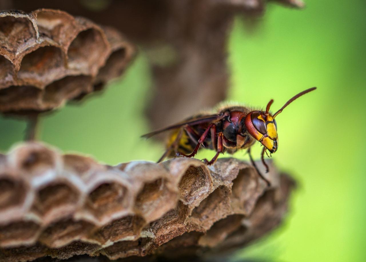 どんな蜂に刺された夢?蜂の種類による夢の意味