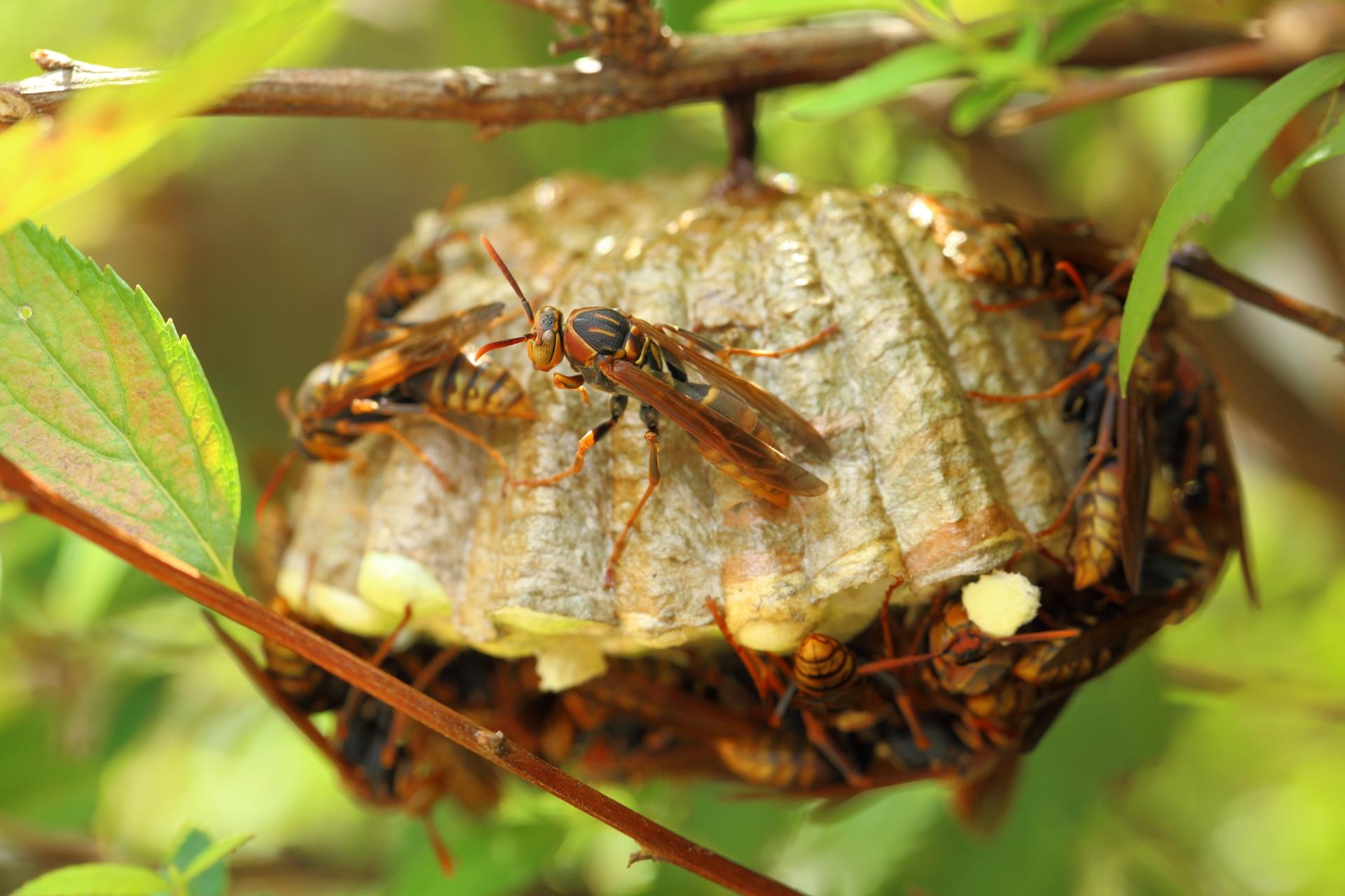 蜂に刺される夢が吉夢になるパターン