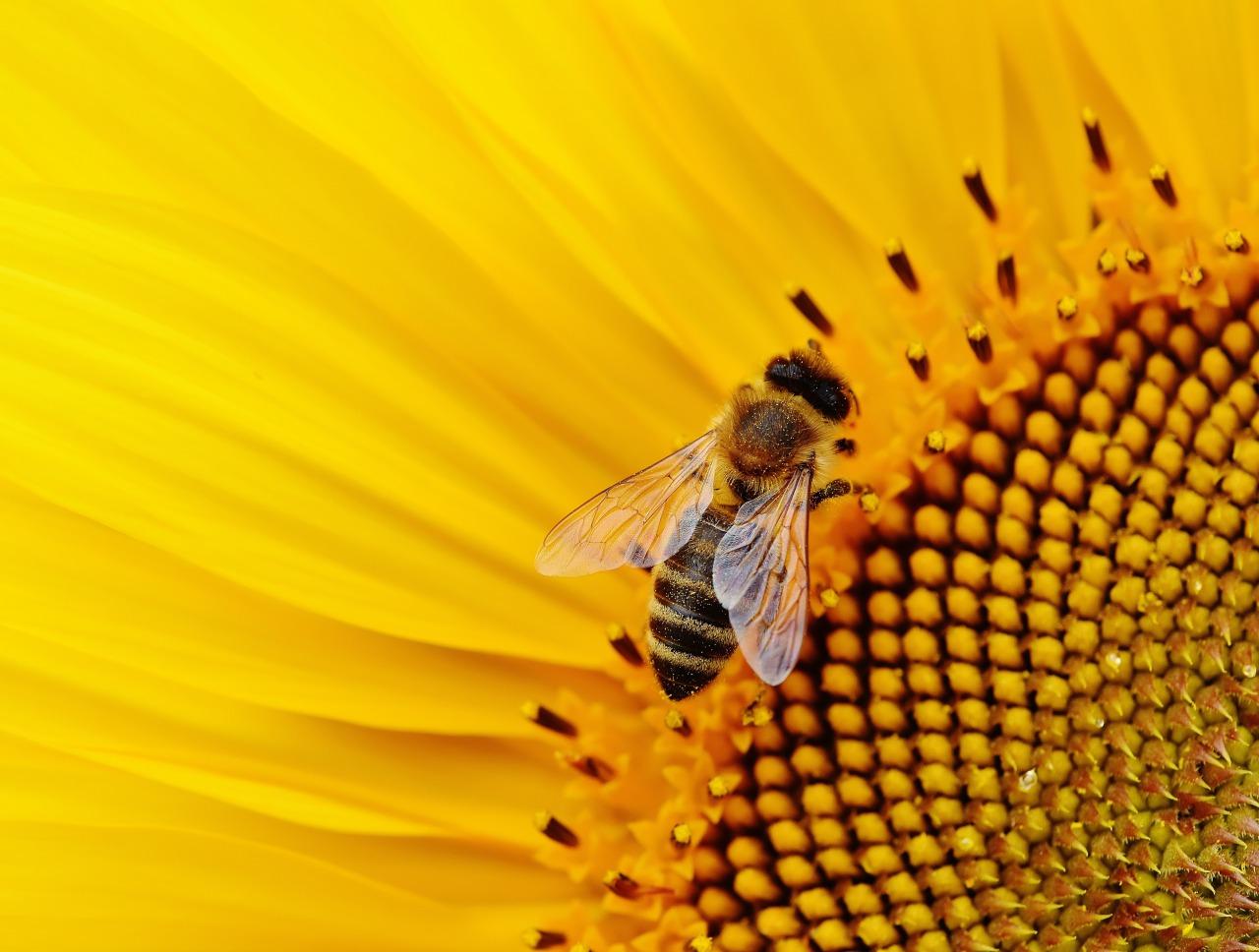 なぜ蜂に刺される夢を見たのか?
