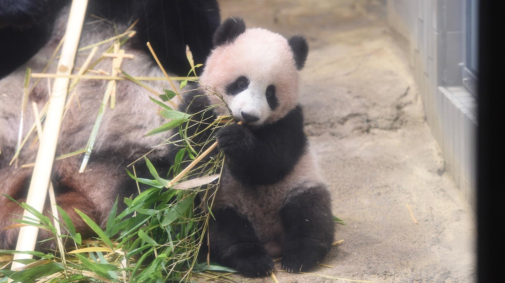 パンダのシャンシャンに続け! 動物園の人気者に会いに行こう【Vol.1】